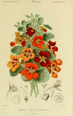 Nasturtiums are one of my favorite Summer Annuals. Many bright sunny happy colours and heights!  LOVE :)