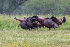 Calling All Turkeys-Know Your Turkey Calls – Everything outdoors, from hunting and fishing articles, to DIY outdoor/indoor woodworking projects by Cedarantler. Small Woodworking Projects, Woodworking Courses, Small Wood Projects, Woodworking School, Learn Woodworking, Popular Woodworking, Woodworking Plans, Woodworking Furniture, Woodworking Articles
