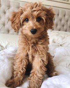 - dulce y sabroso - Cute Dogs - perros Super Cute Puppies, Cute Baby Dogs, Cute Little Puppies, Cute Dogs And Puppies, Cute Little Animals, Cute Funny Animals, Doggies, Cute Pups, Cute Dogs And Cats