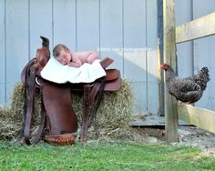 Newborn baby photo shoot on the farm.  Baby on a western saddle and a curious  chicken!  Baby photography, newborn session, farm inspired photo session.  Photo by: alexis rae photography