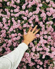 Pinterest M  Abi escobar  ❤ love pink