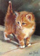 Trudi Finch kitten