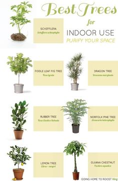 Tree and plants that are suitable for use indoors.
