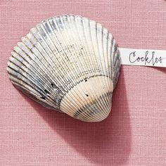 Cockle Shells - America's Most Popular Seashells - Coastal Living