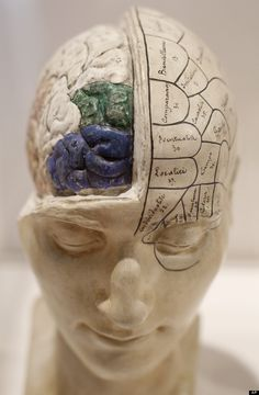 The Brain as art!  French Phrenological Model  A French Phrenological model, from the mid 19th century, of a head with brain exposed is seen on display at an exhibition call 'Brains - The Mind as Matter' at the Wellcome Collection in London, Tuesday, March 27, 2012. The free exhibition is open to the public from March 29- June 17. (AP Photo/Alastair Grant