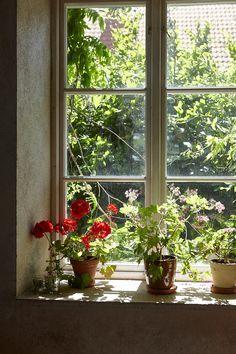 Guide till Österlen - 6 bästa tipsen! — Nordiska Kök Potted Plants, Pretty Plants, Windows, Inspiration, Window Ledge, Small Hallways