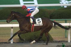 デスペラード Desperado (JPN) 2008 B.c. (Neo Universe (JPN)-Meine Noel (JPN) by Tony Bin (IRE) 1st Kyoto Kinen (JPN-G2,2200m,Kyoto)