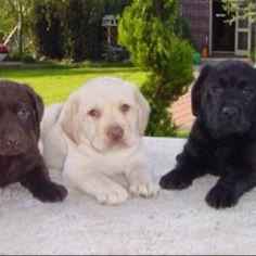 I'll take one of each