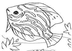 Realistic Seahorse Sea Animals Coloring Page