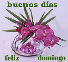 Buenos días feliz domingo