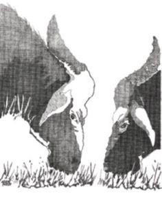 Búfalos de la India
