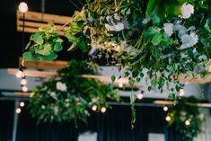 Wedding receptions and ceremonies are delightful moments at the Tailrace Centre. Marriage takes longer then a day to plan and we are here to help. Wedding Receptions, Event Styling, Lush, Greenery, Centre, Marriage, In This Moment, Lighting, Plants