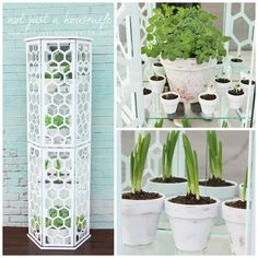(link) DIY TUTORIAL: Hexagon Greenhouse ~ Before and After: A Thrift Store Curio Cabinet Becomes a Vertical Greenhouse ~ for more great PINs w/good links visit @djohnisee ~ have fun!