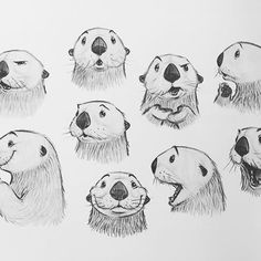Tiere cartoon Otter Expressions by Jason Dreamer - Drawing Cartoon Characters, Character Drawing, Character Illustration, Drawing Cartoon Animals, Drawing Cartoons, Cartoon Art, Animal Sketches, Animal Drawings, Art Sketches