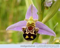 Orchidee - orchidee,blüte,grinsen,pflanze,lachen,gesicht,lol