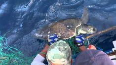 Aboard Quiteña / Off the coast of Guatemala Good People, Animal Rescue, Turtle, Coast, Creatures, Animation, Animals, Youtube, Turtles