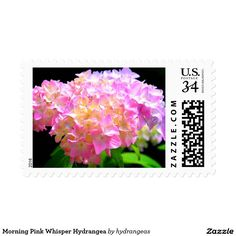 Morning Pink Whisper Hydrangea Stamp