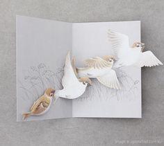 pop up card birds
