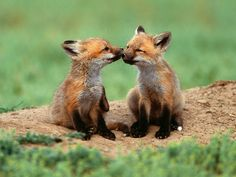 photos of animals showing friendship | My Grid-Creation-Box - Page 10