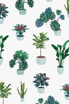 Houseplants That Filter the Air We Breathe House Plant On Behance Abstract Illustration, Plant Illustration, Plant Wallpaper, Drawing Wallpaper, Collage Architecture, Plant Sketches, Illustrator, Illustration Inspiration, House Plants Decor