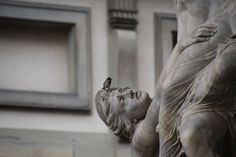 sparrow - Loggia dei Lanzi - Florence Garden Sculpture, Lion Sculpture, Tuscany, Florence, My Photos, Birds, Statue, Outdoor Decor, Art
