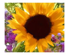 Sunshine Sunflower Photographic Print by Elaine Plesser at Art.com