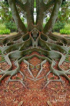 Fabuloso árbol