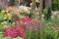 Paperbark Garden Design cottage planting in North Yorkshire, UK.