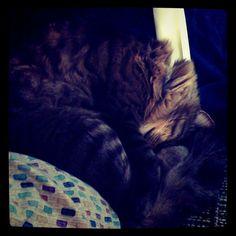 yoda thinks he's cute!