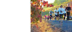 Healdsburg Wine Country Half Marathon 10/25/14