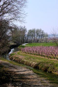El blog de Ana H: Torres de Segre / Lleida