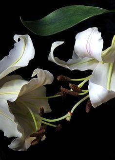 #whitelily#myclayflowers#coldporcelainflowers