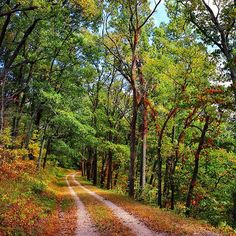 anderson_photo Deciduous trees, southern Ohio. #deciduousforest #road #country #rural #appalachia #path #nature #landscape #trees #forest #ohio #midwestmoment #joshuaandersonphotography