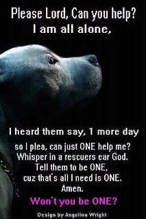 Please..... SAVE A LIFE ~ ADOPT A HOMELESS PET.