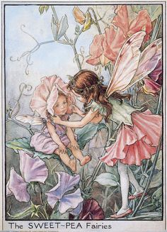 Illustration for the Sweet Pea Fairies from Flower Fairies of the Garden. A girl fairy leans down towards the left placing a sweet pea bonnet on a young girl baby fairy (her sister) who is seated on a leaf.  										   																										Author / Illustrator  								Cicely Mary Barker