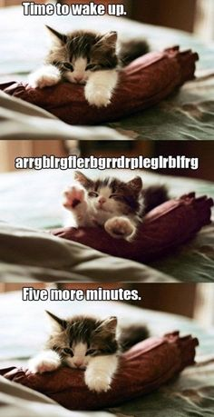 story of my life. pretty sure i was a cat in the life before...