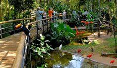 Parque da aves foz do iguaçu - Brasil