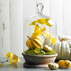50 Easy Fall Decorating Projects Decorate your home inside and outside with gourds, leaves, pumpkins, nuts and other seasonal materials for beautiful fall DIY displays. Thanksgiving Table, Thanksgiving Decorations, Seasonal Decor, Holiday Decor, Fall Table, Harvest Decorations, Autumn Decorating, Decorating Ideas, Decor Ideas