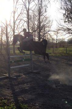 """Standardbred can't jump"""