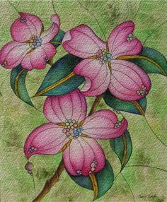 Pink Dogwood Blossoms~Watercolour, Ink and Acrylic by Laura Leeder.11.5 x 9.5inches www.lauraleeder.com  Sold October 2014