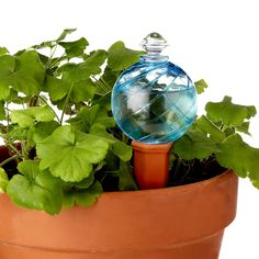 If you're anything like me, watering plants is not your strong suit. I have been looking all over for one of these automatic plant waterers! This one is super cute too! (watering globe and plant nanny stake) Best Gifts For Gardeners, Plants In Bottles, Self Watering Planter, Watering Plants, Water Globes, Garden Stakes, Garden Path, Dream Garden, Herb Garden