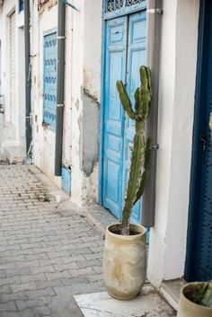 Tunis Part How to Explore Sidi Bou Said In One Afternoon