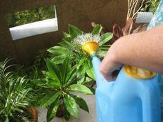 Természetes tápoldatok szobanövényekhez