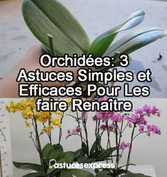 Orchids: 3 Simple and Effective Tips to Revive Them - Willemma Hawkslee Permaculture, Plants, Garden, Indoor Garden, Floral Arrangements, Orchids, Planters, Flowers, Nature