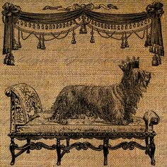 Skye Terrier Dog Crown Throne Chaise Puppy Royal Digital Image Download Sheet Transfer To Pillows Totes Tea Towels Burlap No. 1457. $1.00, via Etsy. Skye Terrier, Terrier Dogs, Terriers, Cat Design, Little Dogs, Dog Bed, Digital Image, Burlap, Dog Prints