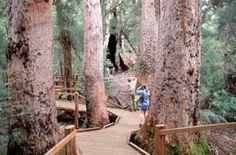 Valley of the Giants Tree Top Walk - Attractions - Denmark Western Australia