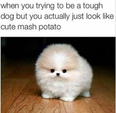 A cute mash potato dog