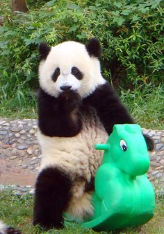 I want ride to like other kids too but my mom said I was not kid I was a panda. I'm a kid I think that so I'm a kid. Kids are kids. My actions are what I do not anyone elses. Go for panda gut.
