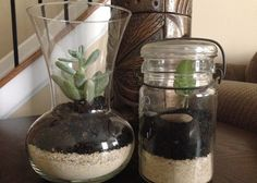 Terrarium projects for my daughters would be a great gardening project.