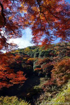 Arashiyama in Kyoto: On the way to the monkey park (November 2012).